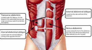 six pack and other abdominals